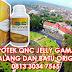 Alamat Apotek Penjual QnC Jelly Gamat di Malang dan Batu Original