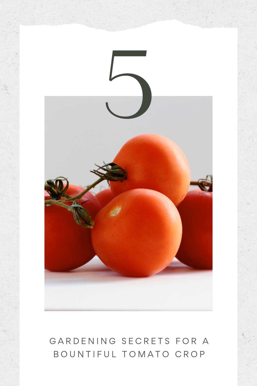 gardening secrets for tomato garden