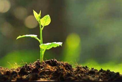 Dibawah Ini Contoh Tumbuhan Yang Penyebaran Bijinya Dilakukan Dengan Bantuan Air Adalah