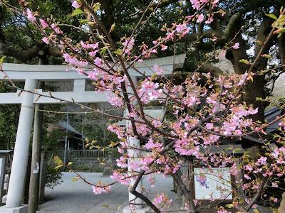 御霊神社のカワヅザクラ