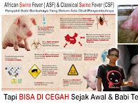 Cara Mencegah Penyakit ASF Pada Babi (SUDAH TERBUKTI AMPUH)
