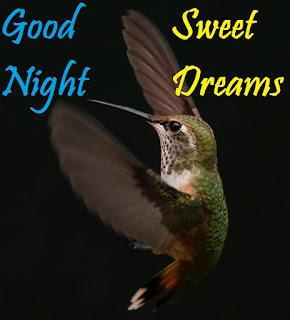 hummingbird good night