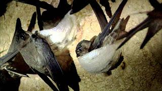 Chim yến làm tổ tầng tầng lớp lớp.