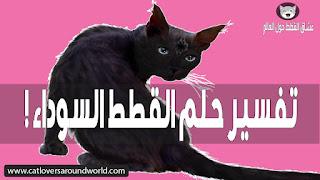تفسير حلم القطة السوداء أو القط الأسود بالتفصيل المفيد