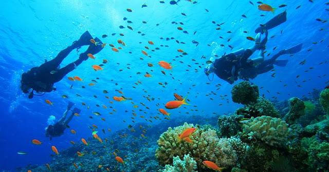 Pemandangan Bawah Laut Pulau Maspari