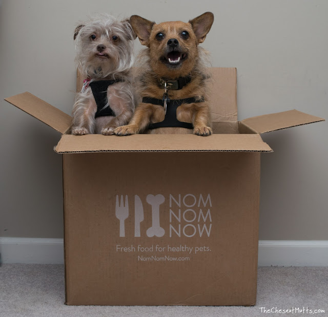 Bailey and Jada in a NomNomNow dog food box