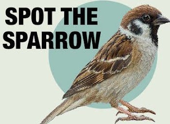 World Sparrow Day: Twitter Concerned Over Disappearing Avian Companions