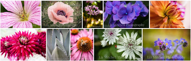flower prints, gallery of flower images, flower prints for florists