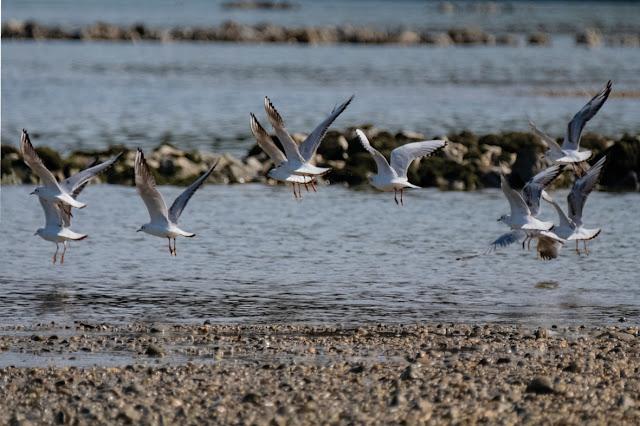 Seagulls / Möwen © Chris Zintzen @ panAm productions 2019