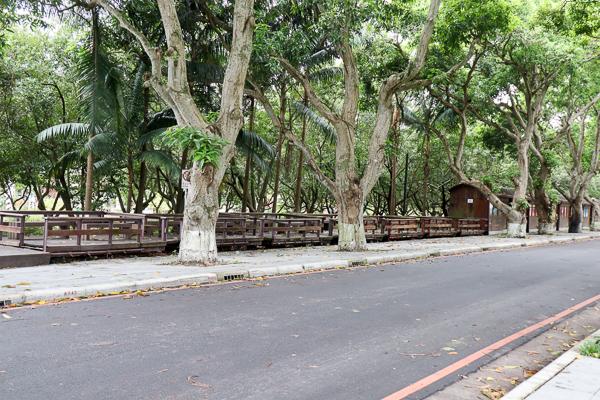 雲林古坑綠色隧道全家踏青好去處,順遊228公園和蜜蜂故事館