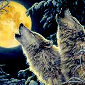 Mustika Raja Serigala Putih Gunung Kelud