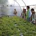 Se desarrolla instalación de secador solar para evitar pérdidas de alimento