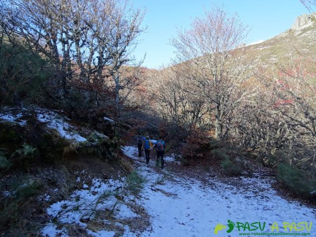 Bajando por bosque nevado al Valle Pinzón