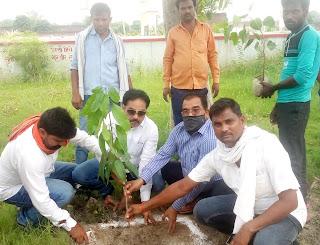 सेनापुर में किया गया पौधरोपण | #NayaSaberaNetwork