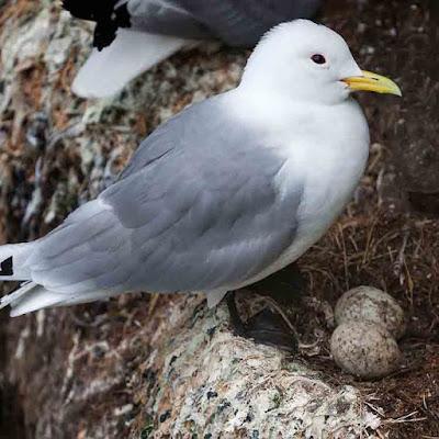 طيور مع بيضها، صورة طائر فوق البيض فى العش