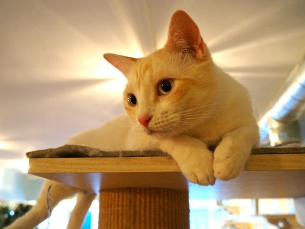 chats paris