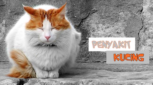 Penyakit yang Sering Menyerang Kucing
