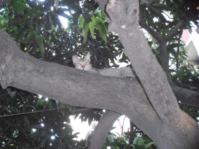 2 Beautiful pictures of A cat looking curiously: from a tree