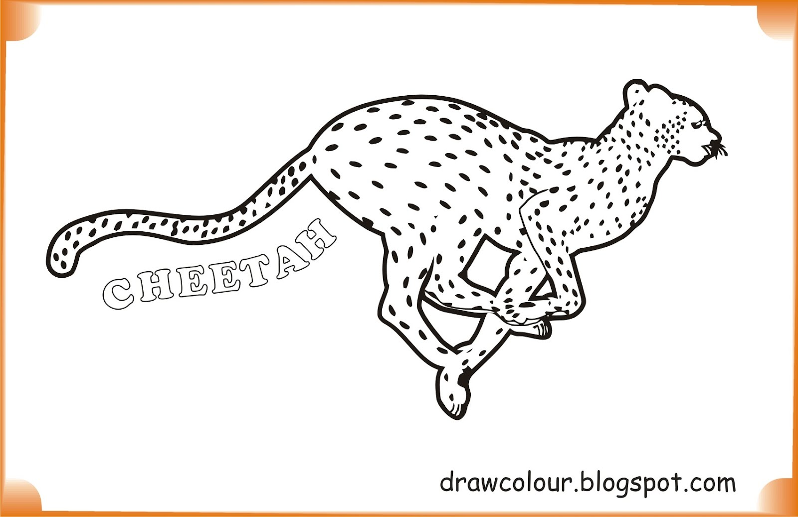 Cheetah drawings with color - photo#45