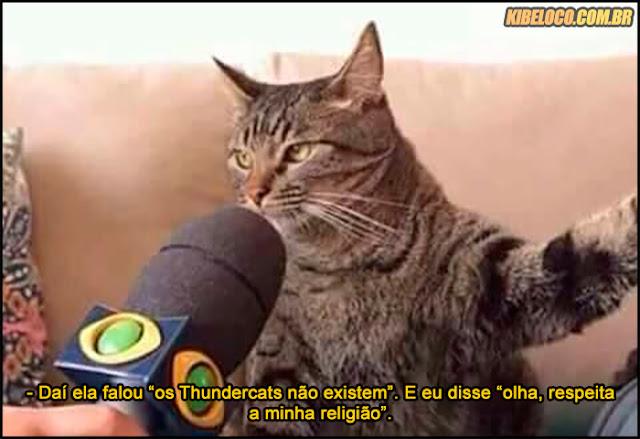 Imagens de gato dando entrevista