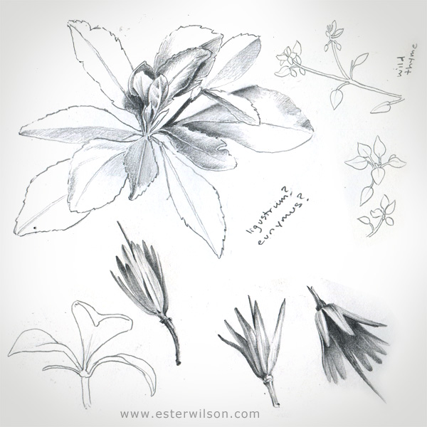 Sketchbook Botanical drawings