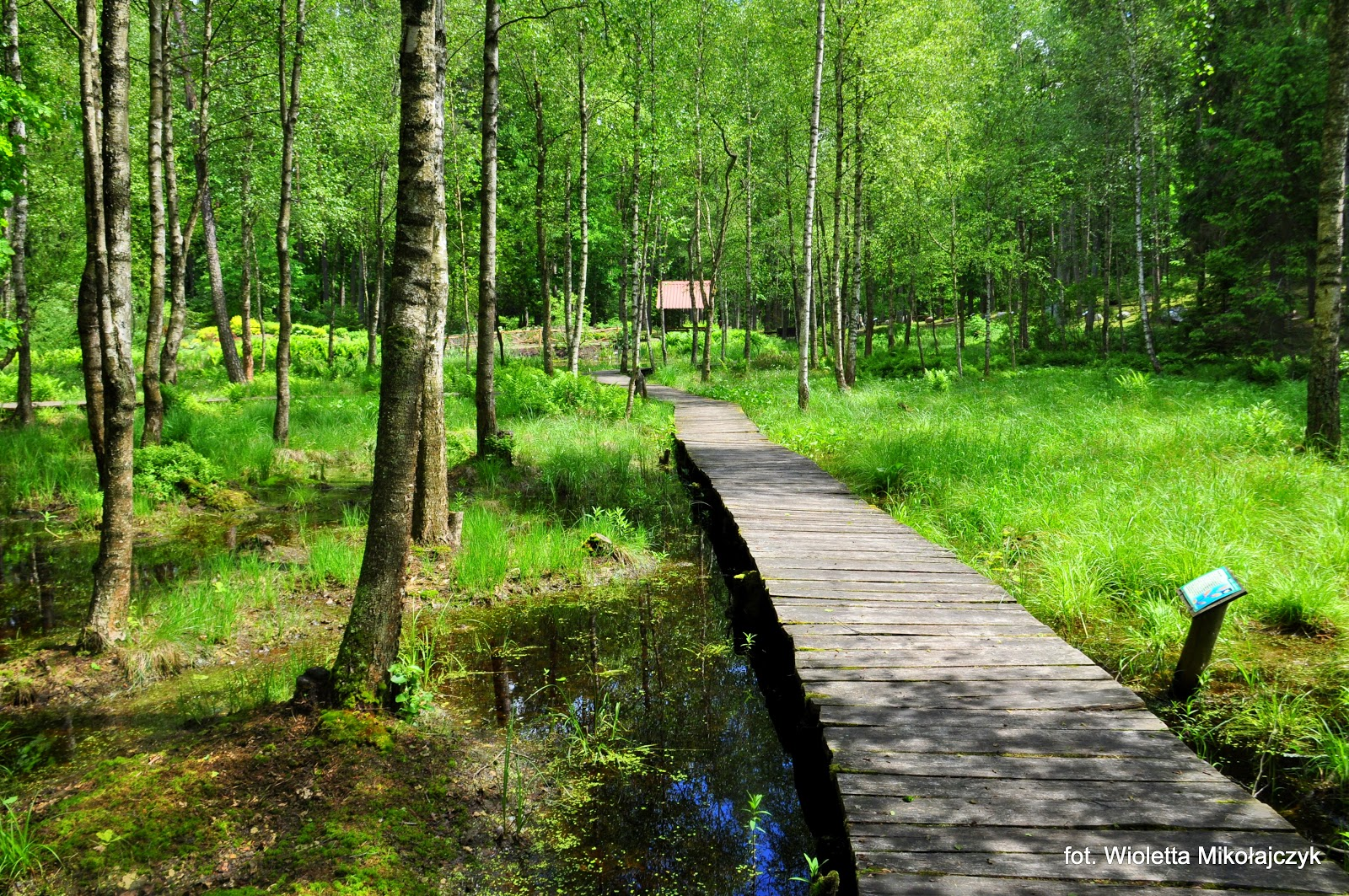 Arboretum w Kudypach.