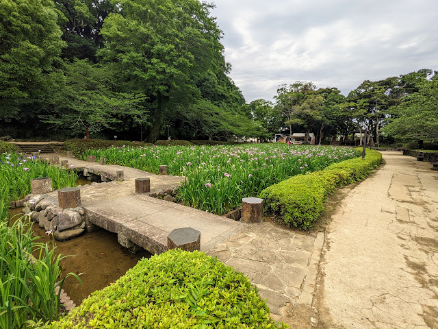 大村公園おおむら花菖蒲まつりに行ってきました!合わせて大村神社に参拝!