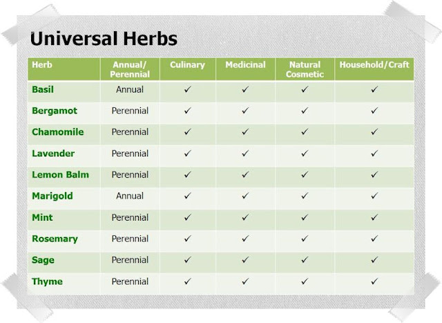 10 Universal Herbs