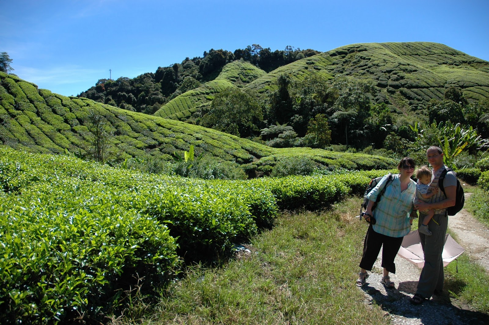 Cameron Highlands