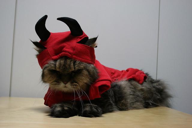 http://1.bp.blogspot.com/-jA4y5j8AXBA/To6HvMtMQKI/AAAAAAAALzs/x9bJtx8RzLk/s1600/cat_devil.jpg