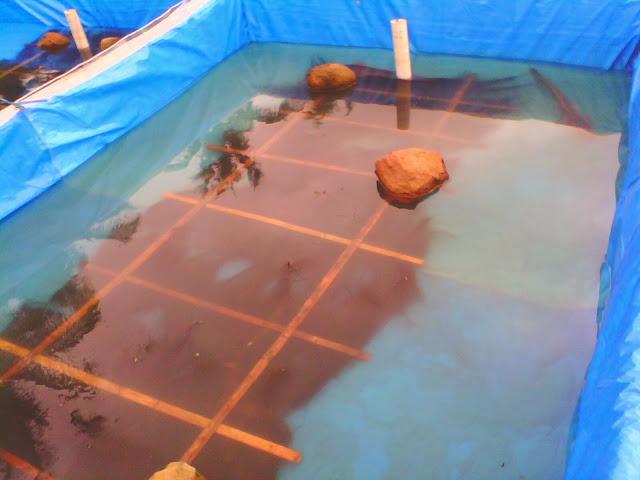 Kolam untuk Pemijahan Ikan Lele