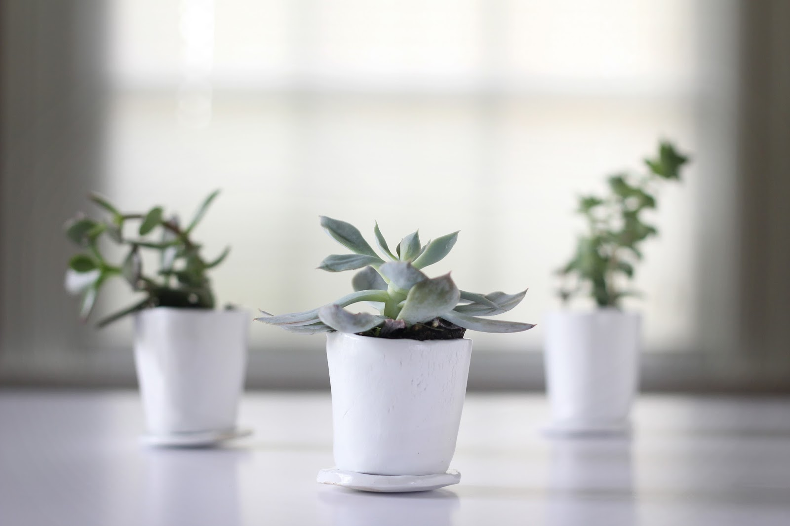 We Can Make Anything Diy Succulent Pots