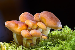 Mushroom Fact Hindi   Josforup