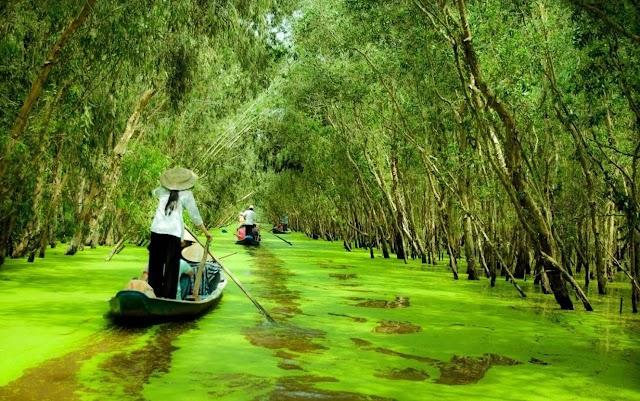Thả hồn giữa bức tranh thiên nhiên bình dị ở rừng Trà Sư (An Giang)