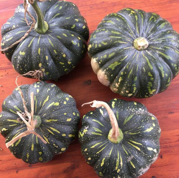 Four home grown pumpkins