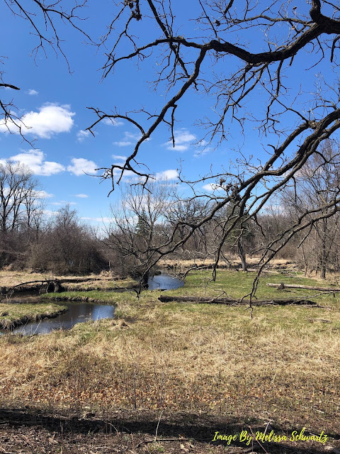 Wetlands were alive with the chorus of frogs at Bluff Spring Fen.