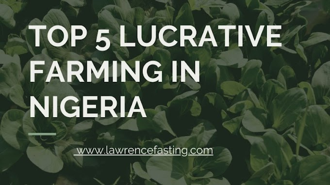 Top 5 Lucrative Farming In Nigeria