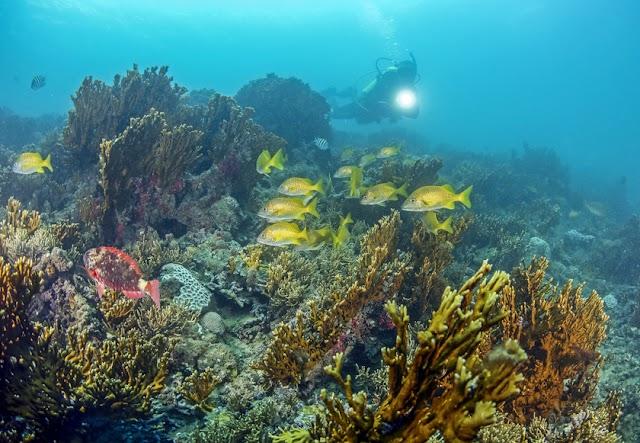 Brasil usa tecnologia pioneira para criar banco de gametas e gerar corais de proveta