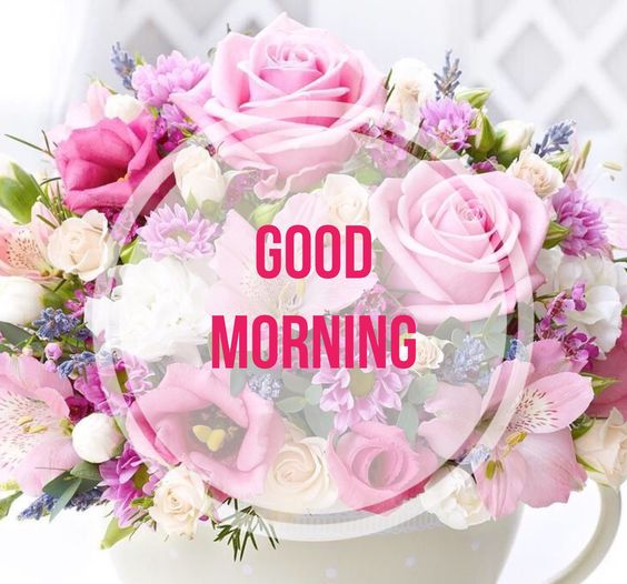 Good Morning With Beautiful Pink Flowers