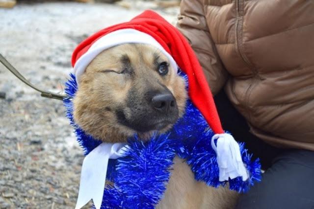 Неизвестные прикормили бездомную собаку, а потом выпустили в неё 5 патронов. Смогла ли она после этого поверить людям?