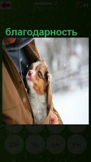собака находится под курткой мужчины и с благодарностью смотрит на него