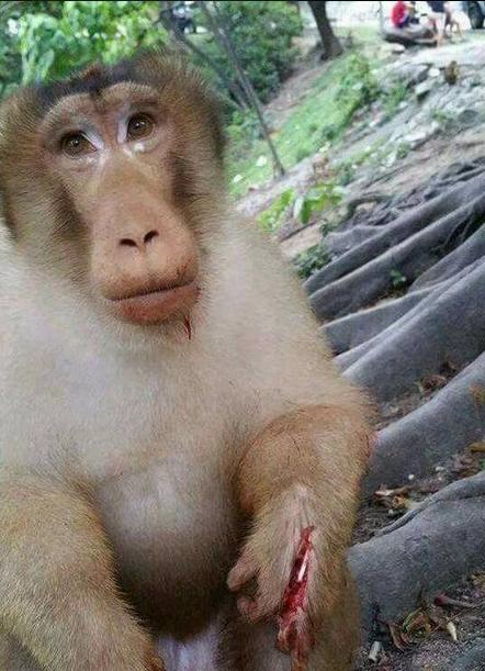 Seekor Monyet Dimercon hingga Tangannya Berdarah dan Terbelah