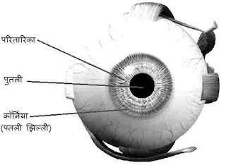 मानव नेत्र क्या है? तथा इसके भाग