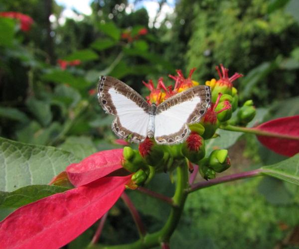 https://www.bioorbis.org/2020/04/guia-de-campo-borboletas-lepidopteros.html