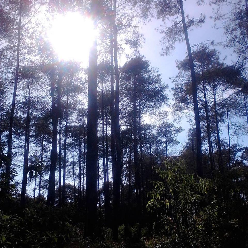 Hutan pinus Cikole lembang bandung