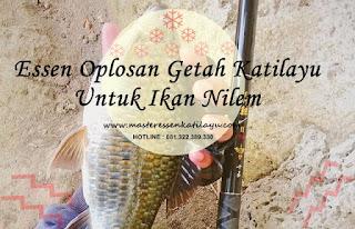 Essen Oplosan Katilayu Untuk Ikan Nilem
