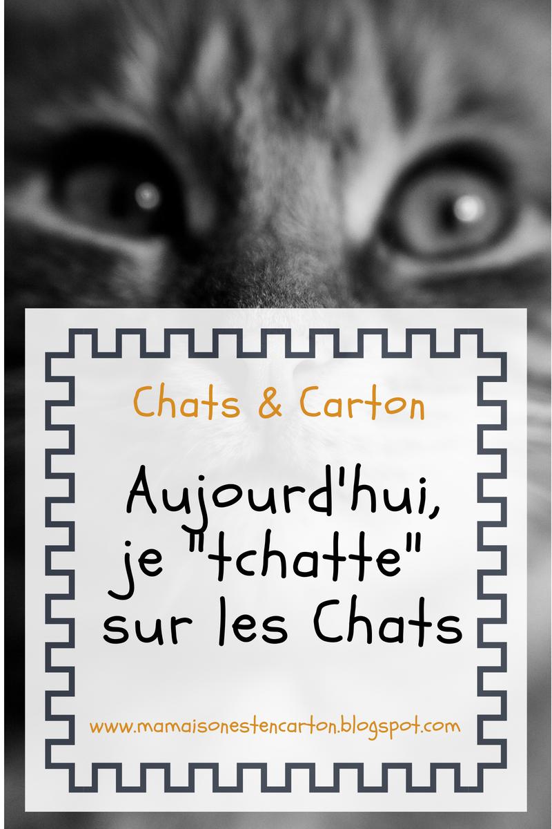 chat et carton 37