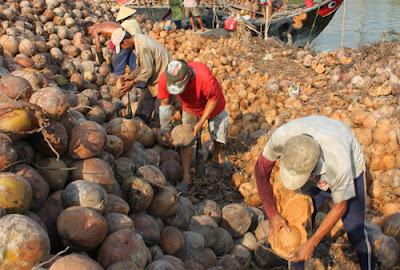 nhập khẩu dừa khô từ indonesia