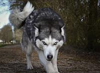 Wolf - Photo by Jeroen Bosch on Unsplash