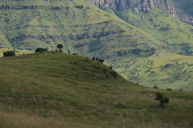 Hiking Inside #GiantsCastle #GameReserve #Drakensberg #SA #PhotoYatra #TheLifesWayCaptures